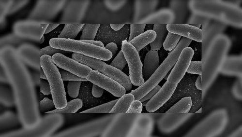 Бактерии кишечной палочки могут производить дизельное топливо