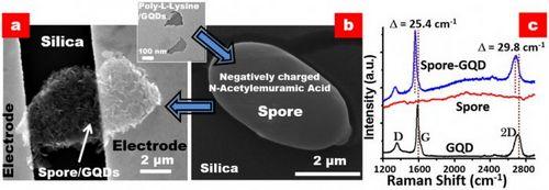 Бактерия с квантовыми точками на базе графена реагирует на изменение влажности в 10 раз быстрее современных датчиков