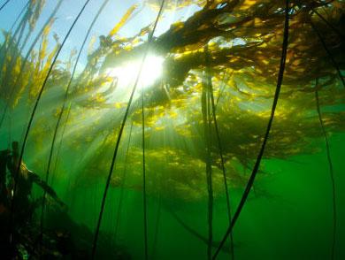 Биомимикрия в действии: энергогенерирующие водоросли у берегов австралии
