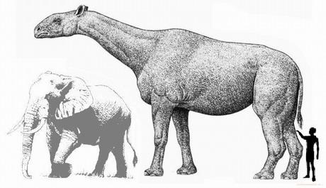 Доисторические женщины имели более сильные плечи, чем современные чемпионки гребли - ученые