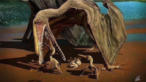 Древние птерозавры заботились о своих беззубых птенцах - ученые