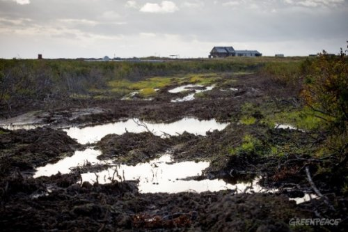 «Гринпис» против нефтяников: обвиняют друг друга внеуважении кненцам - «энергетика»