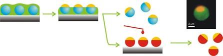 Химики создали двуликие частицы