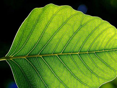 Искусственные листья обеспечат электроэнергией страны третьего мира
