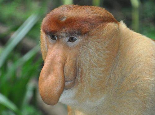 Изучение обезьян бразилии поможет ученым мониторить другие виды исчезающих животных