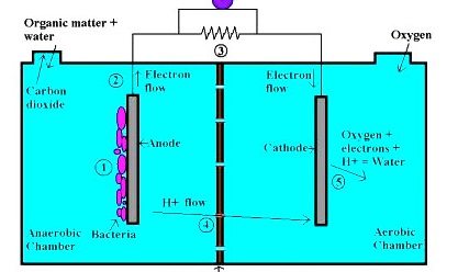 Эффективные микробные топливные элементы