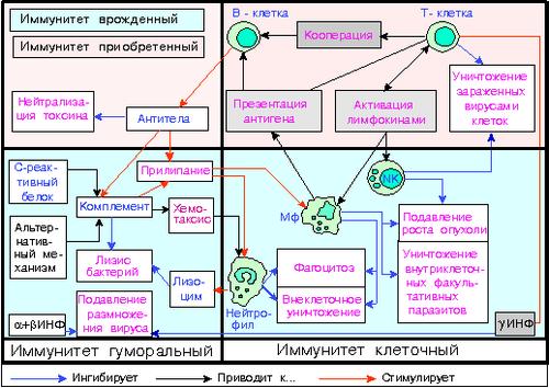 Клеточный ремонт: определена главная функция витамина е