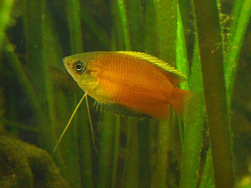 «Мальтийский» — рыбкам