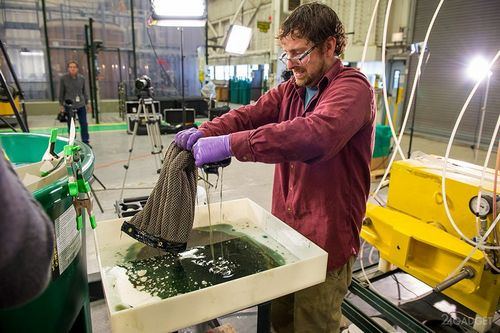 Найдено эффективное средство для сбора нефтепродуктов, разлитых в воде (5 фото + видео)