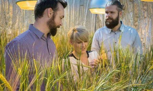 Обнаруженный учеными ген урожая поможет зерновым адаптироваться к изменениям климата