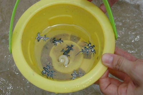 Раковины моллюсков помогли ученым в 200 раз увеличить прочность стекла