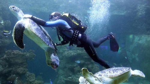 Специалисты сколково решили существующие проблемы в подводной навигации