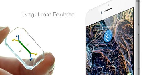 «Тромбоз-на-чипе»: технология имитирует сгустки крови