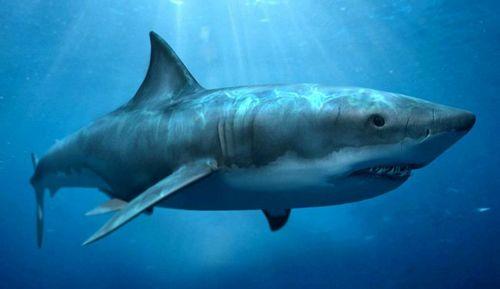 У рыб обнаружены гены, обеспечивающие их устойчивость к раку