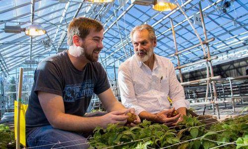 Ученые: исследования происхождения картофеля поможет использовать его скрытый потенциал