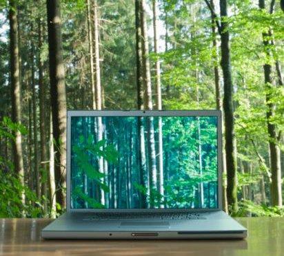 Wi-fi опасный для деревьев